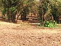 Van Vihar National Park pic2.jpg