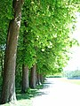 Vaux le Vicomte (1342938460).jpg