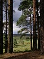 View from the pines, Kingston Great Common, New Forest - geograph.org.uk - 501206.jpg