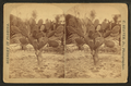 View of a cactus plant, from Robert N. Dennis collection of stereoscopic views.png