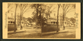 View of a tree-lined street, from Robert N. Dennis collection of stereoscopic views 2.png