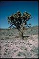 Views at Joshua Tree National Park, California (4e62bf06-59cd-41a6-b683-eaee9ab6e7ab).jpg