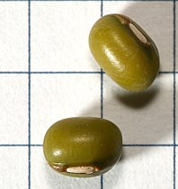 Vigna.radiata.seeds.jpg