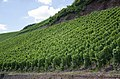 Vineyards Urzig jun 2018 (2).jpg