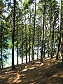 Waldweg - Aggertalsperre - geo.hlipp.de - 14921.jpg