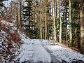 Waldweg - panoramio (29).jpg