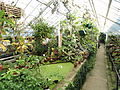 Warm Temperate House - Lyman Plant House, Smith College - DSC04202.JPG