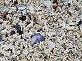 White coral beach, close-up view.jpg