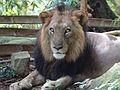 Wild life at zoo 30.jpg