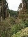 Wind damage - geograph.org.uk - 329887.jpg