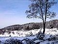 Winter im Teutoburger Wald09.jpg