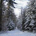 Winterwanderung Alsenborn Hans Buch.JPG