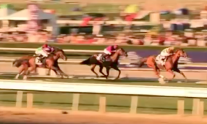 Wise Dan - Wise Dan winning the 2012 Breeders' Cup Mile