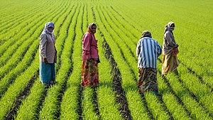 Women at work, Gujarat (cropped).jpg