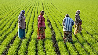 Women at work, Gujarat (cropped).jpg