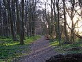 Woodland near Mop End - geograph.org.uk - 150436.jpg