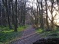 Woodland near Mop End - geograph.org.uk - 150436.jpg