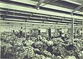 Woolsorters Interior of Port Adelaide wool store (11167492605).jpg