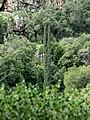 Yagur – Nesher, the Green Path – Mount Carmel 046.JPG