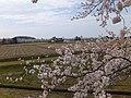 Yatsuomachi Nishijinzu, Toyama, Toyama Prefecture 939-2311, Japan - panoramio (11).jpg