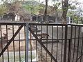 Yerevan zoo 8.JPG