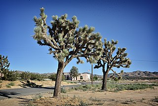 Yucca Valley, California Town in California in the United States