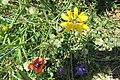 Zakynthos flora (35485758330).jpg