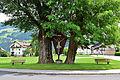 Zell am Ziller - Naturdenkmal ND 9 21 - Pappel und Robinie mit Wegkreuz und Bankerln.jpg