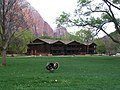 Zion lodge.jpg