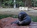 Zoo de Mulhouse-Otarie.JPG