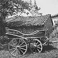 """""""Kripa"""" (voz), Borjana 1951.jpg"""