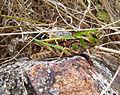 (151) Green grasshopper.jpg