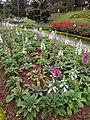 Đà Lạt flower park (August 6, 2018) (44026209521).jpg