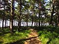 Ścieżka prowadząca na plażę w Lubiatowie.JPG