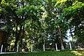 Вижницький парк лікарні, Вижниця.jpg