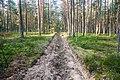 Вскопанная полоса в лесу - panoramio.jpg