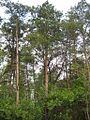 Дендрологічний парк 398.jpg