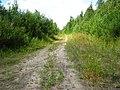 Дорога вдоль берега Лепсари и эта идут параллельно - panoramio.jpg