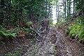 Дорога на лесоповал - panoramio.jpg