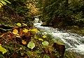 Есен в Каньона на водопадите.JPG