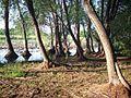 Ивы Ива - panoramio.jpg
