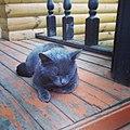 Кот на деревянной террасе в Дворяниново.jpg
