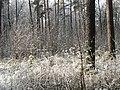 Лес перед Окружной Трассой 25.11.2012 - panoramio.jpg