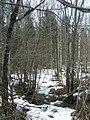 Майский снег на опушке леса - panoramio.jpg
