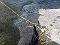 О.Лиственный. Странная линия в структуре скалы. - panoramio.jpg