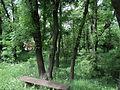 Парк шума Гази Баба во мај (22).JPG