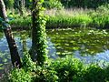 Плиса зеленью укрылась - panoramio.jpg