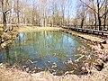 Правобережная старица реки Яузы с рогозником на участке долины реки Яузы между Широкой и Осташковской ул.jpg