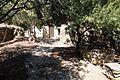 Тенистые оливы - panoramio.jpg