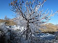 قندیل های یخی بر روی درخت گیلاس ، اثر فواره، پاییز کلاته بابا احمد - panoramio.jpg